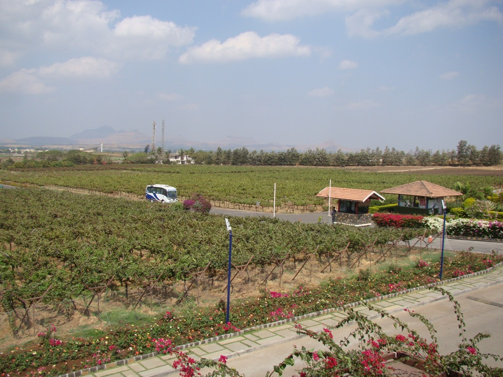 A serene weekend at the vineyards in Nashik (4/6)
