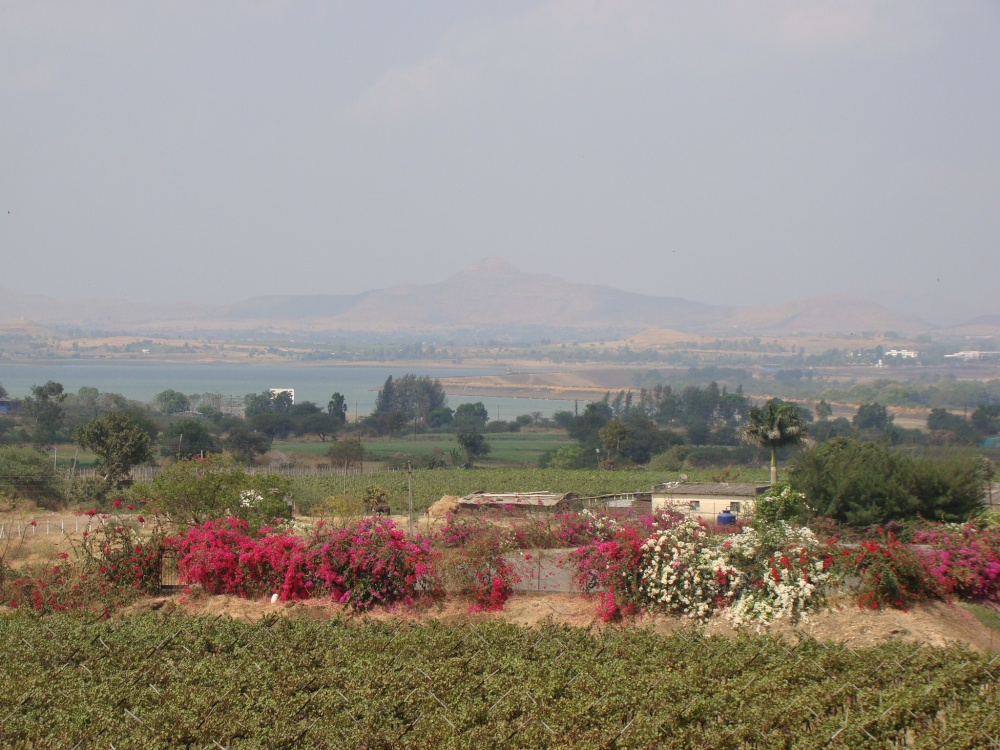 A serene weekend at the vineyards in Nashik (5/6)